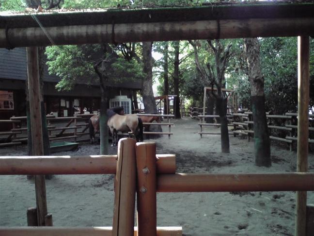 20110816_zairaiba_P1000001.JPG